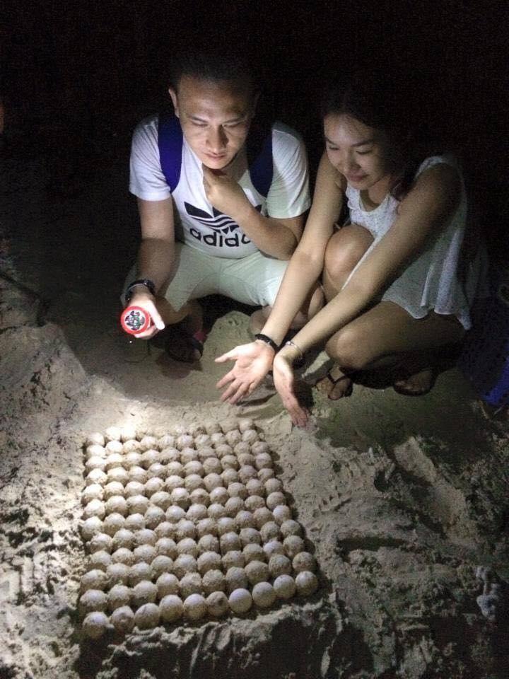 Vích (rùa biển) tại Côn Đảo