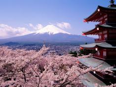 Du lịch Nhật Bản Mùa Hoa Anh Đào: Tokyo - Núi Phú Sỹ  - Yokohama - Ibaraki 5N4Đ