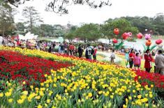 Du lịch Đà Lạt: Đà Lạt - Rưc rỡ sắc hoa