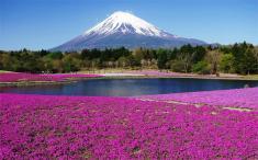 Du lịch Nhật Bản Mùa Hoa Anh Đào 5 ngày 4 đêm